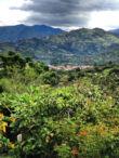 Ecuador Vilcabamba - 1kg