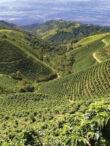 Kolumbiai szüreti gyümölcskávé - 500g