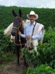 Kolumbiai szüreti gyümölcskávé - 250g