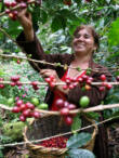 Koffeinmentes - Nicaragua Nueva Segovia - 1kg
