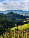 Koffeinmentes - Nicaragua Nueva Segovia  - 500g
