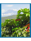 guatemala nueva granada farm